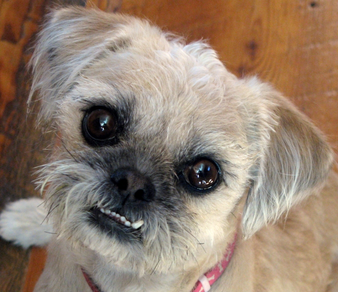 Meet Pearl: The Rescued Miracle Dog Who Rescued Me